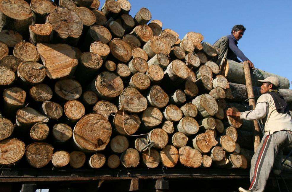 harga kayu usuk per ikat